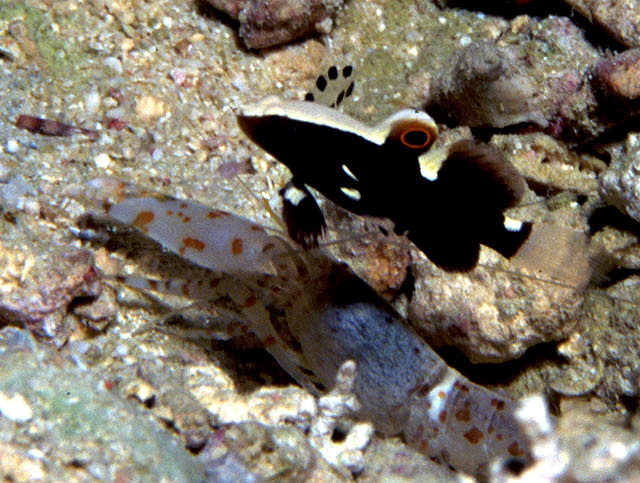What 39 s new in the east coast fish watch project for White cap fish